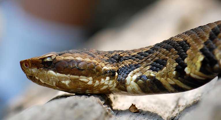 ¿las serpientes pueden oir?