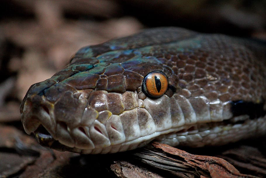 como ven las serpientescomo es la vision de las serpientes